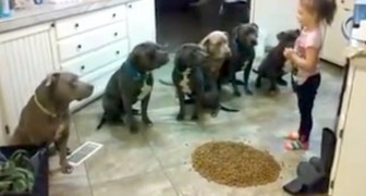 Look at what this little girl does with her 6 pit bulls: and these are AGGRESSIVE dogs?