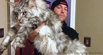 Ils volent un chat puis le rendent à sa maîtresse : il mangeait trop