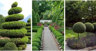 Siepi, alberi e cespugli potati: rendi scenografico il tuo giardino con queste idee fantasiose