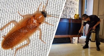 Vendetta strisciante: liberano migliaia di scarafaggi in un ristorante per punire il proprietario