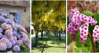 Sol argileux dans le jardin ? Découvrez quelles sont les meilleures plantes à choisir et comment les entretenir
