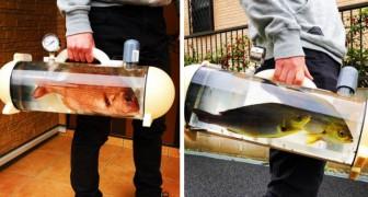 Eine Firma entwickelt die Kofferraumtasche, um Babyfische auf Spaziergänge mitzunehmen
