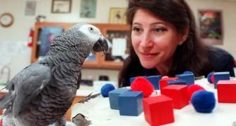 Alex, o papagaio que tinha a mesma inteligência de uma criança de 5 anos e que realmente falava