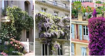 Balconi fioriti ma senza vasi: lasciati ispirare da questi splendidi progetti