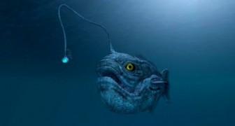 Un poisson à l'aspect monstrueux a été mystérieusement retrouvé sur une plage de Californie