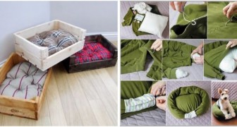 Niches pour chiens et chats : découvrez comment vous pouvez en créer à partir de vieux pulls et autres objets communs
