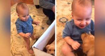 Un bimbo di appena 1 anno riceve in regalo un cucciolo e la sua reazione è impagabile