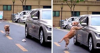 An inconsiderate motorist throws a piece of paper out of the window, but a passing dog teaches him a lesson