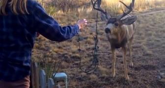 Avistam um cervo e veem que ele precisa de ajuda. Mas não será muito fácil...