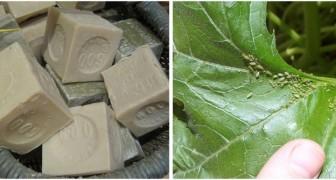 Sapone di Marsiglia sulle piante: scopri come usarlo per la cura del verde