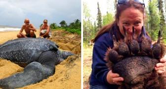 Une grandeur inattendue : 15 photos incroyables nous montrent des animaux dans leur vraie taille
