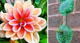 Botanische wonderen: 17 ongewone planten die mensen hebben besloten te vereeuwigen