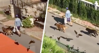A mysterious woman walks down the street followed by dogs, cats and birds: it looks like a scene from a fairy tale