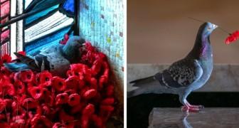 Um pombo rouba papoulas do túmulo do soldado desconhecido para construir um ninho: uma imagem poética