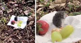 He sees a hungry mouse and organizes a little picnic: a very sweet gesture