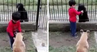 Un bimbo offre ad un cane randagio il cibo del proprio cane: ce n'è per tutti
