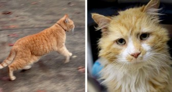 Kat reist 20 km om de wrede familie te bereiken die hem expres in de steek had gelaten
