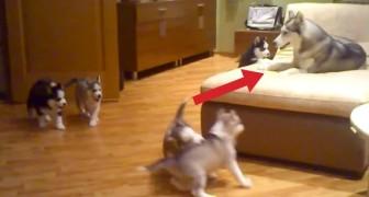Mira como esta mamá se divierte con los cachorros. La reaccion? MARAVILLOSA!