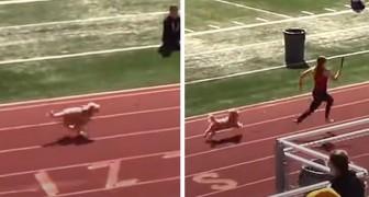 Um cachorrinho sai das arquibancadas e ganha a corrida: o público delira