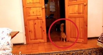 This very funny and suspicious cat is scared of the Super Mario jumping sound!