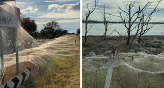 Australien wird von Millionen von Spinnen überfallen und Spinnennetze bedecken alles: Es ist eine Apokalypse