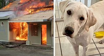Het huis staat in brand terwijl het gezin slaapt: de hond weet iedereen wakker te maken en te redden