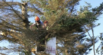 Er schneidet den Baum seines Nachbarn in zwei Hälften, weil er in seinen Platz eindringt: Er stand dort schon seit über 25 Jahren