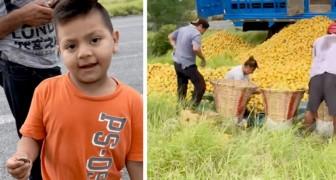 Ils volent des oranges d'un camion renversé sur la route : un enfant s'approche et propose de les payer