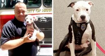 Feuerwehrmann rettet einen Welpen vor einem Brand und beschließt dann, ihn zu adoptieren: Seine Besitzer hatten ihn im Stich gelassen