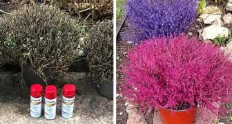 Sprühfarbe auf Trockenpflanzen: der neue Trend für alle, die keinen grünen Daumen haben