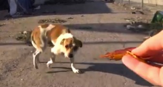 After being hit by a car, this dog was living in the street. Here's how he looks now.