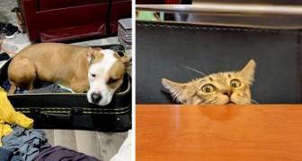 16 jonge huisdieren die niet anders kunnen dan de leefruimtes van hun baasjes binnendringen