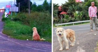 This dog had been waiting for its owners for 4 years, always in the same place: in the end they came back to get it