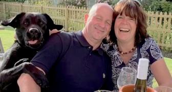 Labrador breekt in op de foto van zijn menselijke ouders en veroorzaakt het gelach van de hele kroeg