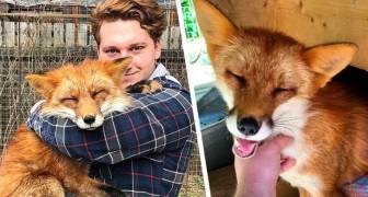 Junge rettet Fuchs aus Pelzfarm: Jetzt sind sie unzertrennlich