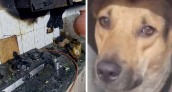 Hund revanchiert sich bei seiner Adoptivfamilie und rettet sie vor einem Hausbrand
