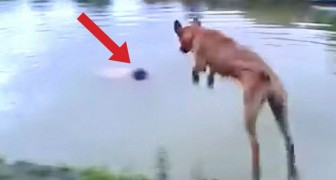 His owner goes under water: the dog's reaction will make you smile !
