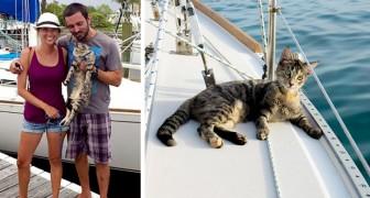 Paar gibt Jobs auf, um zusammen mit seiner Katze in einem Boot um die Welt zu fahren