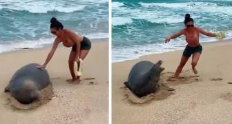 Zwei Frischvermählte berühren in den Flitterwochen auf Hawaii eine gefährdete Robbe: Geldstrafe