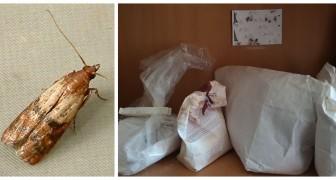 Papillons dans le garde-manger ? Découvrez comment éliminer les mites alimentaires