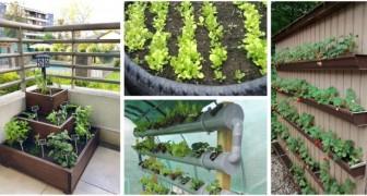 Pneumatici, bottiglie, tubi in PVC: puoi usare di tutto per coltivare un orto in poco spazio