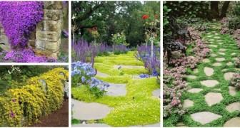 Crea tappeti verdi, fioriti e scenografici in giardino usando le piante tappezzanti