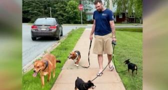Ragazzo si prende cura di due cani quando i proprietari vengono ricoverati in ospedale dopo un incidente