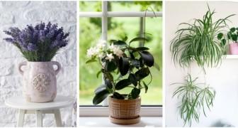 Quelles plantes dans votre chambre ? Choisissez celles qui purifient l'air et garantissent un sommeil réparateur