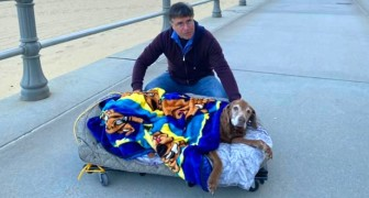 An old and sick dog takes her the last walk in the fresh air on a mobile bed