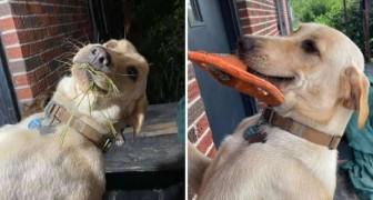 Questo cane affettuoso accoglie ogni giorno la propria padrona con un regalo diverso tra i denti