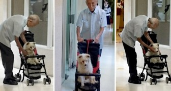 Un homme âgé emmène son vieux chien chez le vétérinaire dans une poussette