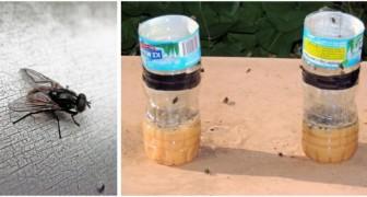Un piège efficace pour les mouches et les moucherons: construisez-le avec une simple bouteille en plastique
