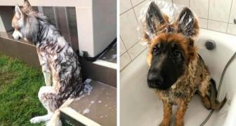 15 honden moesten in bad, maar het werd een complete nachtmerrie