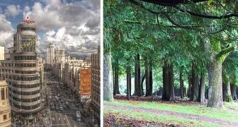 Madrid pianterà un'enorme foresta urbana: 75 km di alberi per pulire l'aria e abbassare le temperature